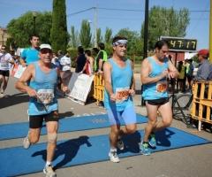 2014-06-01 Argam. alba